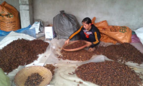 Star Anise Sorting